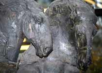 heads of the two horses - one on the left is slightly ahead and looking towards the other